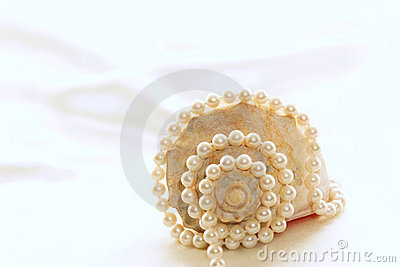 Large conch with pearls 4
