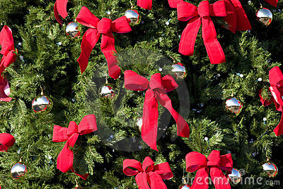 Large Evergreen With Red Bows