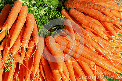 Large group of carrots