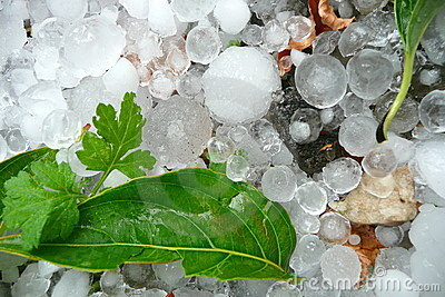 Large hailstones with green leaves