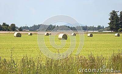 Large Hay Bales in Rural Field