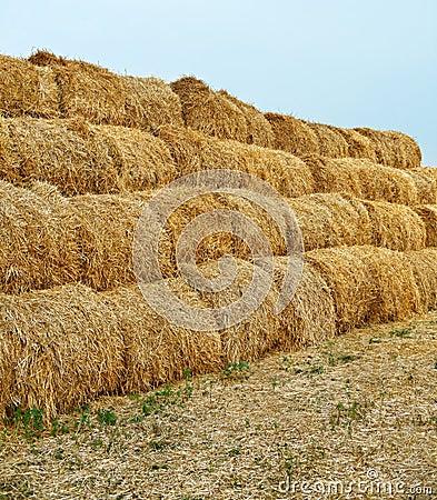 Large haystacks