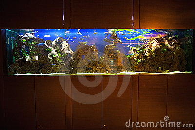 Large home aquarium