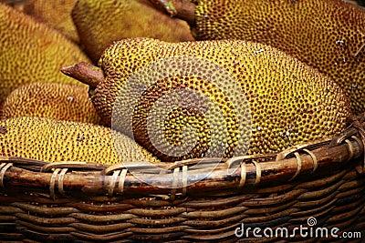Large jack fruit with large spikes