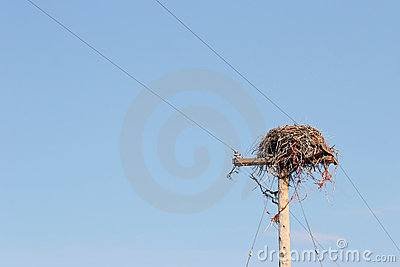 Large nest on utility pole