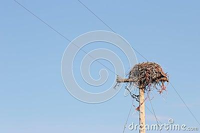 Large nest on utility pole