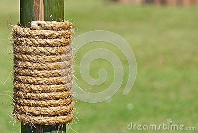 Large rope on bamboo tree with green grass