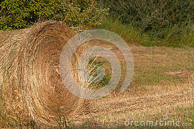 Large Round Bale of Hay