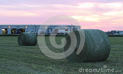 Large round green hay bales at sunset
