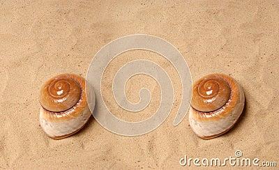 Large seashell on the sand