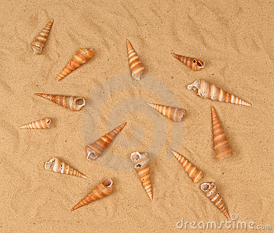 Large seashells on the sand