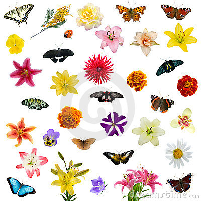 Free Large Set Of Butterflies And Flowers Royalty Free Stock Photos - 16221478