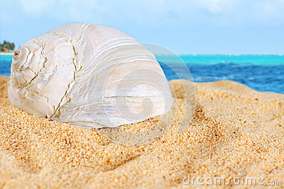 Large shell on beach sand of the Caribbean