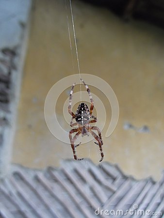 Free Large Spider Hanging Royalty Free Stock Images - 47046499
