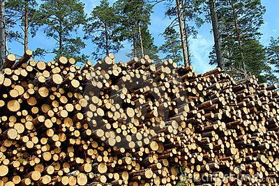 A Large Stack of Wood for Renewable Energy