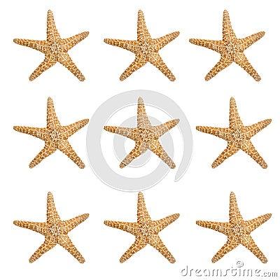 Free Large Starfish Background Royalty Free Stock Images - 2299089