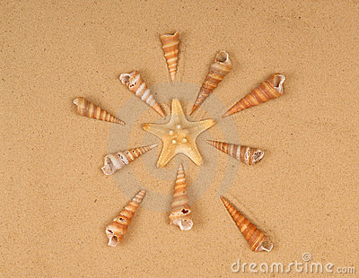 Large starfish and seashells on the sand