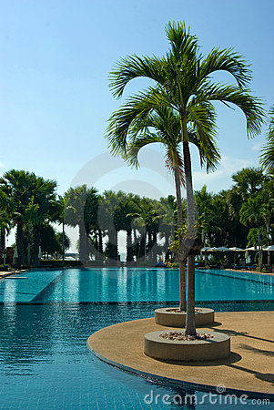 Large swimming pool with palm tree