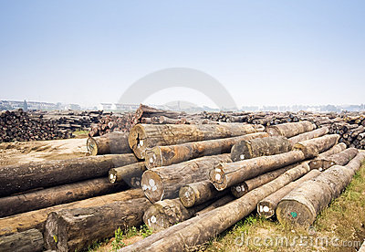 Large timber mill
