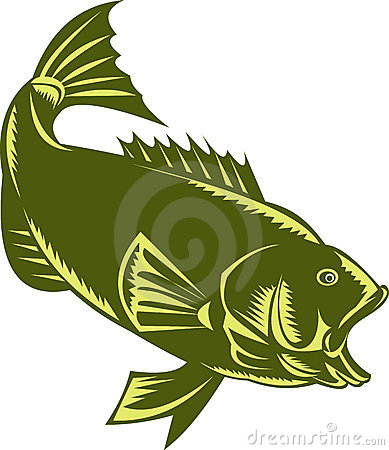 Largemouth Bass  woodcut