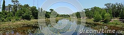 Largo, Florida Landscape