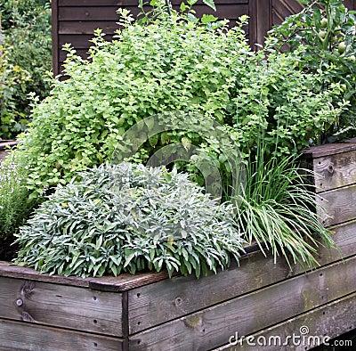 Las hierbas plantan en la cama levantada del jardín