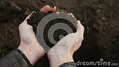 Las manos humanas recogen una muestra del suelo fértil negro almacen de video