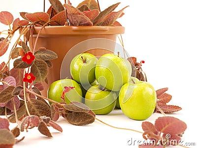 Las manzanas verdes empilaron cerca de las flores y del florero rojos de Brown