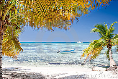 Las palmas verdes en la arena blanca varan bajo el cielo azul