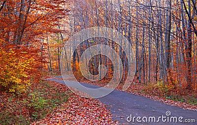 Las przejażdżka