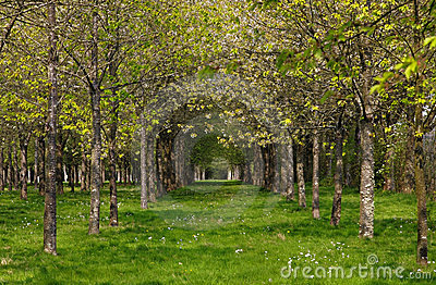 Lasowa wiosna