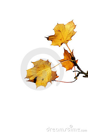 Free Last Autum Leaves Stock Images - 7067864