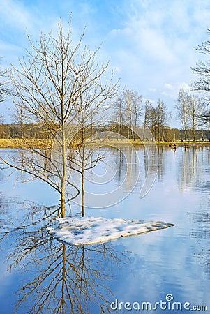 Last ice floe