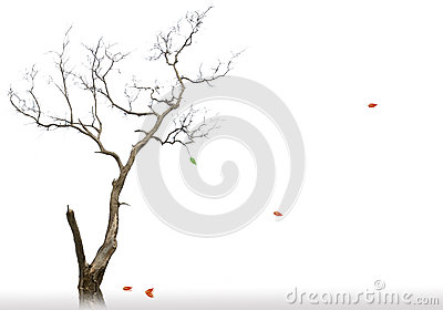 The last leaf of dead and dry tree