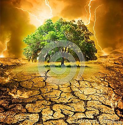 Last oak