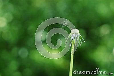 The last seed