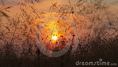 Last sunset on gold fields
