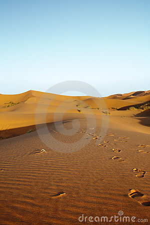 Late afternoon on Sahara desert
