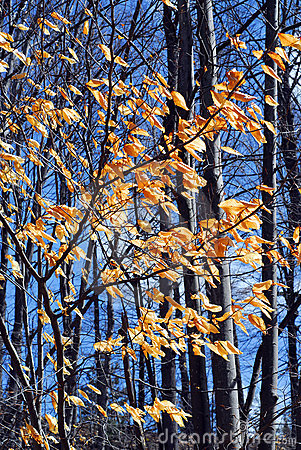 Free Late Fall Forest Stock Photography - 20168052