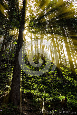 Free Late Summer Sunlight Breaking Through The Trees At A Mystical Lane Royalty Free Stock Photo - 61568715