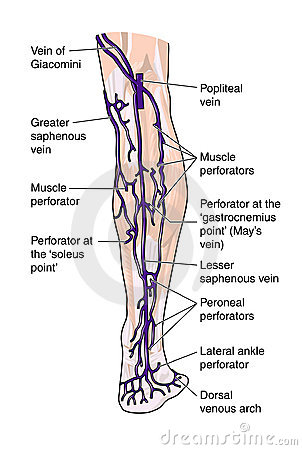 Latere aders van het been