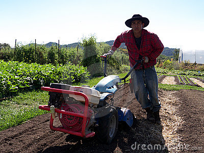 Latino farm worker Editorial Photo