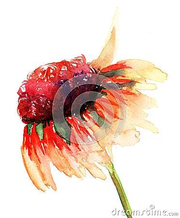 Lato kwiat