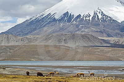 Lauca Nationalpark, Chile
