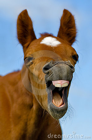 Free Laughing Horse Stock Photography - 15639322