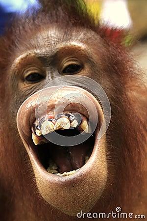 the-laughing-orangutan-thumb14744796 - EB sa ig-agaw igtagsa - Eyeball