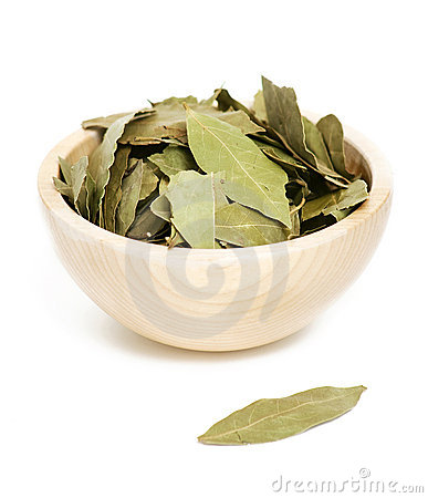 Free Laurel Leafs Stock Photography - 19551152