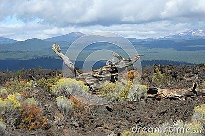 Lava Butte Lava Field
