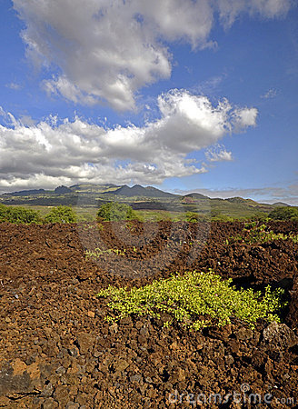 Lava Fields of Maui