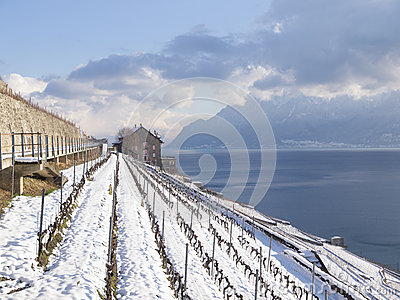 Dezaley In Lavaux During Winter with Snow